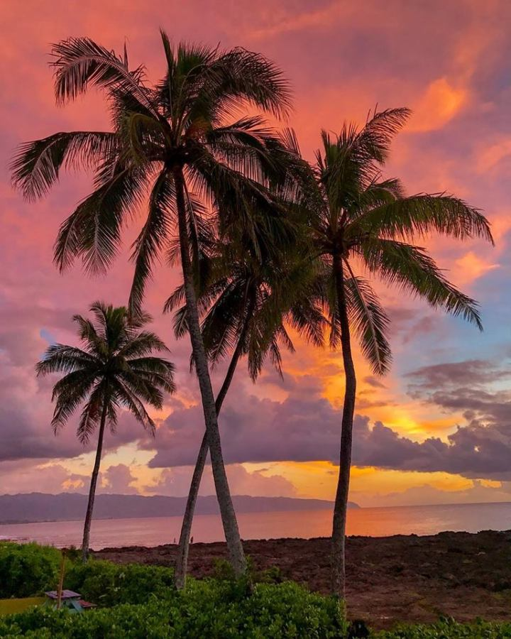 Falling in love withHawaii